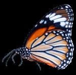 beautiful-butterfly-min